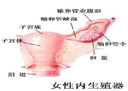 宫颈炎的常规检查包括哪些